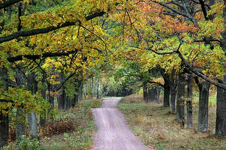 Дубовая аллея (дорога на скит Всех Святых). Фото: Павел Козионов