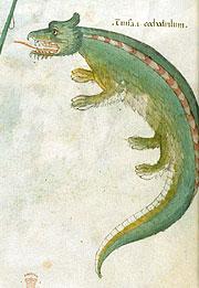 Крокодил. Фрагмент итальянского манускрипта. 1440 г.