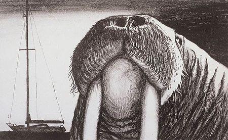 Загрузить увеличенное изображение. 640 x 394 px. Размер файла 73874 b.  Ф.Конюхов. Морж из острова Богослов. 1982