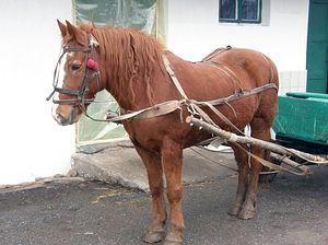 Монастырская лошадка