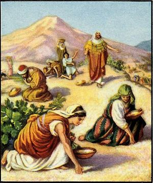 Israelites gathering manna in the wilderness.