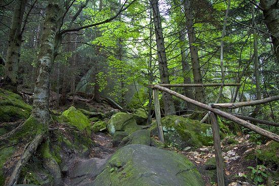 Лес в окрестностях Сихастрии