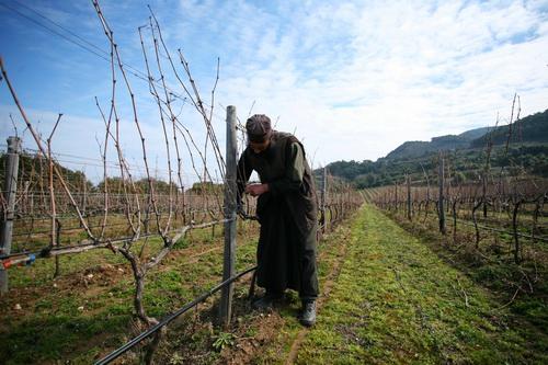 На монастырских виноградниках монах подрезает побеги винограда с помощью пневматического секатора