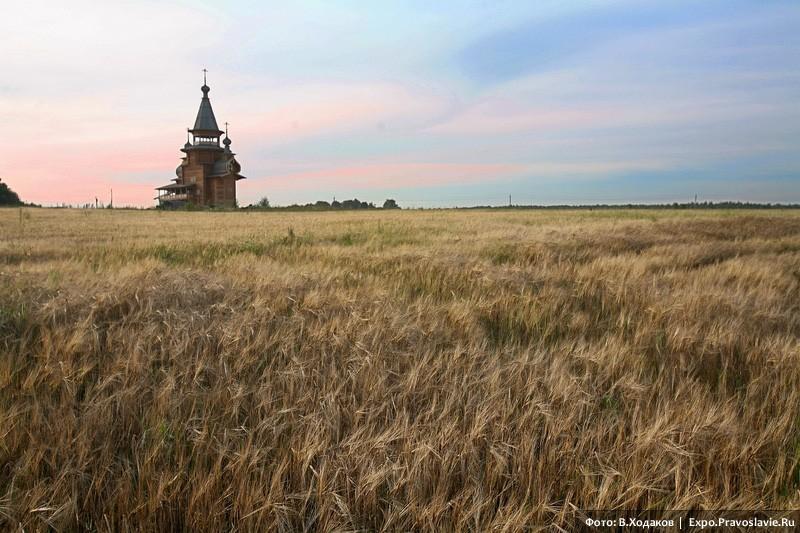 В поле. Фото: Владимир Ходаков