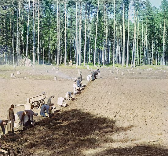 Monks of the St. Nilus Hermitage working: planting of potatoes. Photo by S. M. Prokudin-Gorsky. 1910