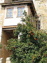 Апельсиновые деревья соседствуют с монастырем