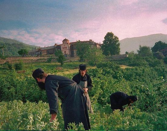 В огороде Филофея