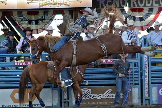 A rodeo in Reno, NV.