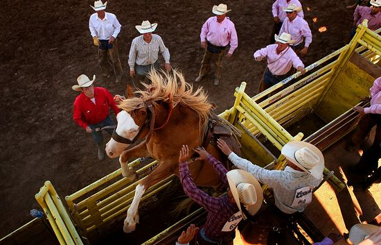 The rodeo championship in Colorado Springs. Photo: Anthony Suffle.