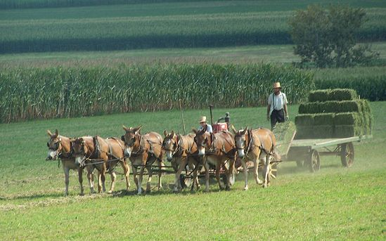 Amish people working.