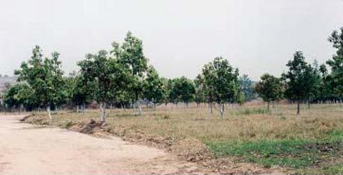 Вид на ферму миссии, созданную отцом Космой в Колвези