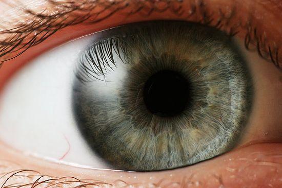Смотрю на схему строения глаза (тем же глазом, кстати, и смотрю), и у меня отвисает челюсть.  Глаз.