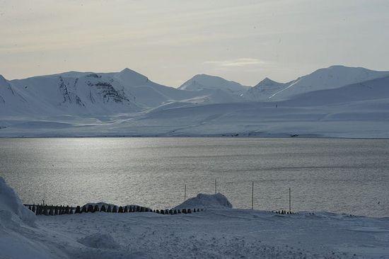 С любовью к Арктике