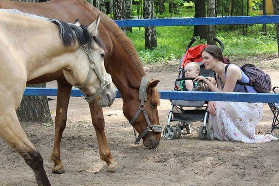 Городские дети и родители всегда радуются, когда видят лошадей, особенно таких ласковых, как в Детском центре. Фото: А.Рахлина