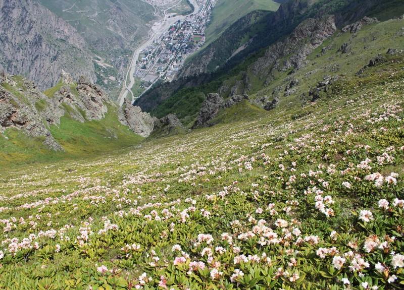 Вид с вершины Тотура . Подходы к вершине покрыты  ковром из рододендронов.