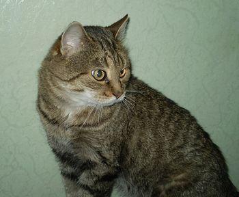 Кот Кит собственной персоной