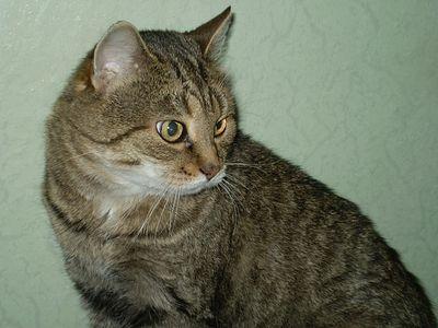 Кот Кит – ювенальный юрист и Валаамов осел