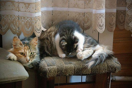 Кошка с котенком в доме Нины Александровны Павловой. Фото: Православие.Ru