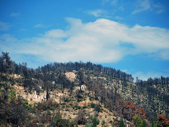 Новая Фиваида после пожара
