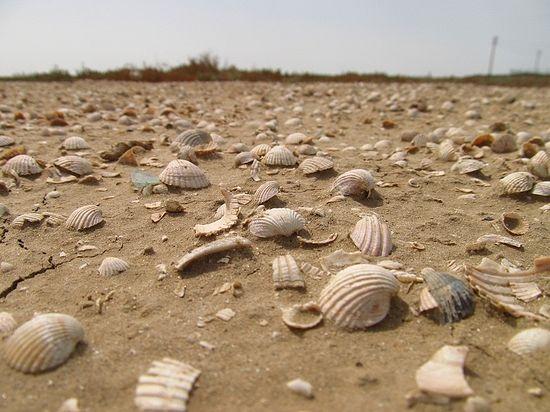 Дно высохшего моря (окрестности Аральска, Казахстан)