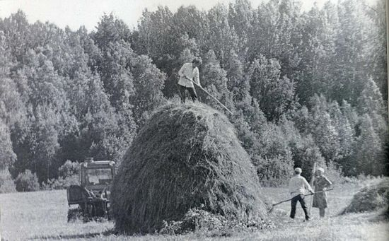 Сенокосная пора. Ферапонтово. 1960 г.