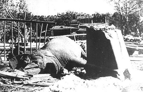 Погибшая от немецкой бомбы слониха Бетти