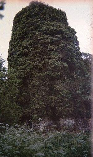 В 1992 году храм был обвит плющом