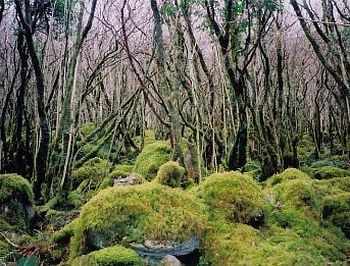 Burren forest today