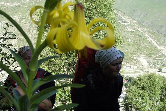 Полевые лилии, Екатерина и Нина