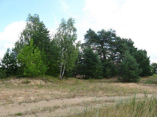 Жуков Борок. Справа – курган с возможными захоронениями, слева – остатки храма