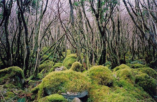 Лес в Буррене недалеко от мест подвигов св. Колмана