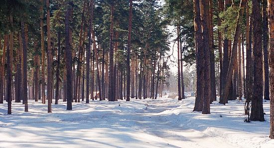 Фото Roman Kondratiev/www.flickr.com