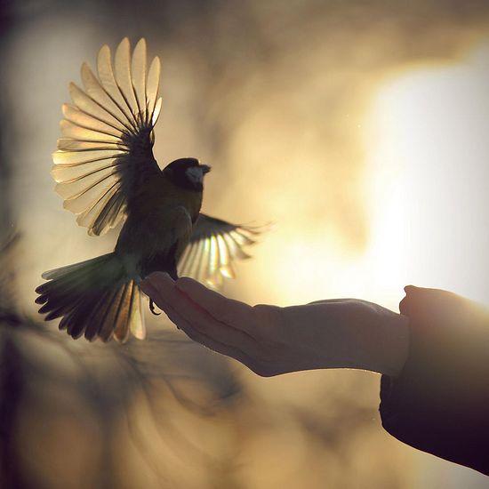 Фото: Иљнур Светгарејев / 500px.com