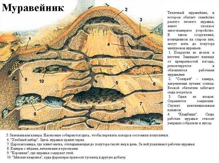 Схема муравейника