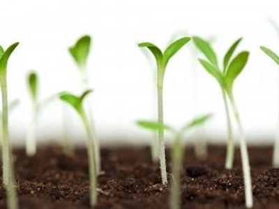 The Buried Seed