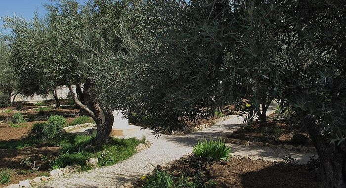 Гефсиманский сад. Фото V . V .(www.flickr.com/photos/svonair/)