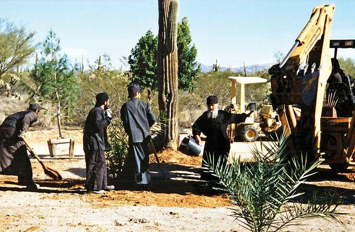 Посадка деревьев, старец Ефрем работает вместе с братией