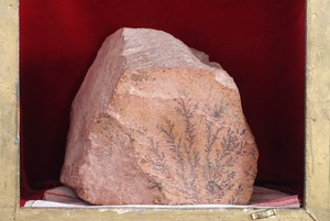 Rocks are found on Sinai bearing the image of the Burning Bush.