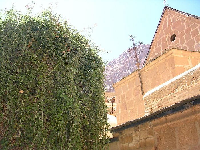 Неопалимая купина в монастыре св. Екатерины