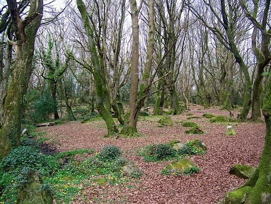 Barna Woods, Galway (source - Geograph.org.uk)