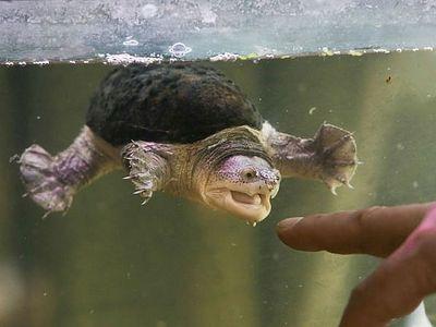 Черепаха в келии
