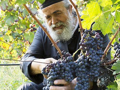 Сбор винограда на Афоне