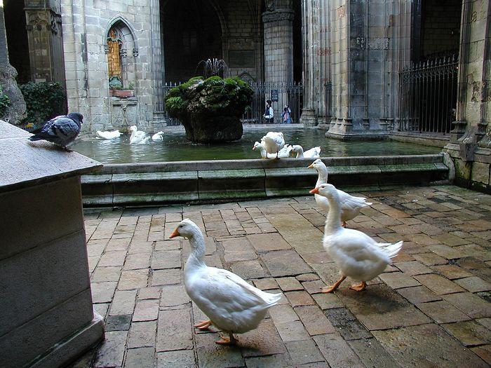 Внутренний дворик в соборе Святого Креста с белыми гусями, посвящёнными мученице - заступнице Барселоны