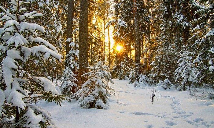 Фото: nevseoboi.com.ua